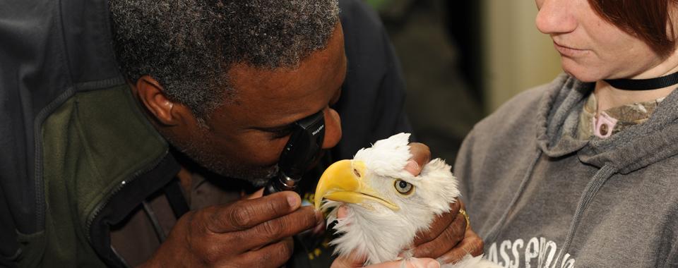 Dr. Jones examining an eagle