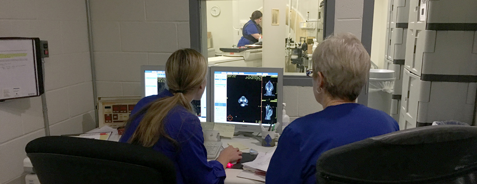 Technicians reviewing a patient's radiology scan