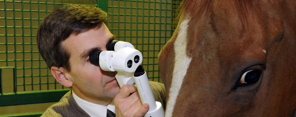 A horse eye exam in progress