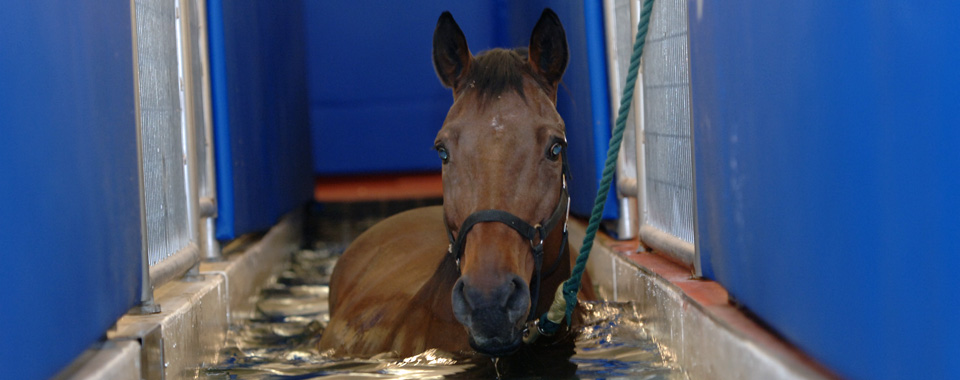 Horse on water treadmill