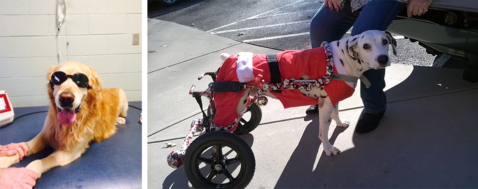 UTCVM CARES program with blind canine and canine in wheelchair