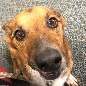 Canine looking at camera